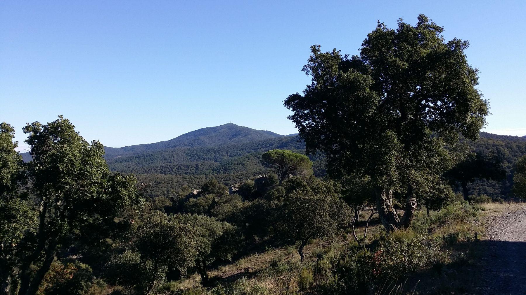 Chêne liège © Communes forestières
